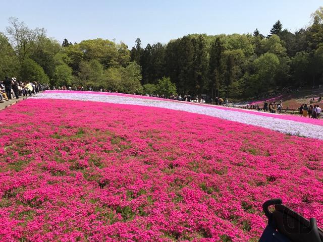 GWは 羊山公園 芝桜の丘 へ 〜 S-TRAINに乗って、横浜から秩父・長瀞に行こう♪